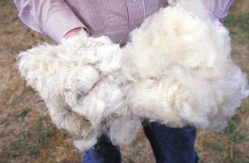 man holding wool fiber