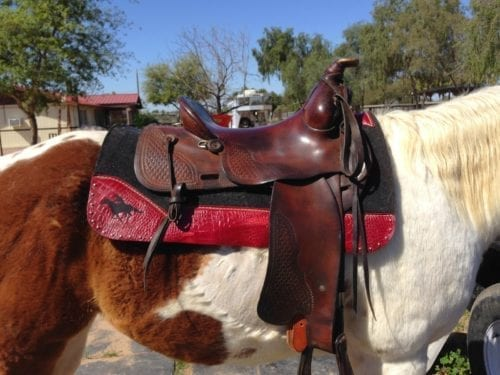 black and red felt saddle pad on horse